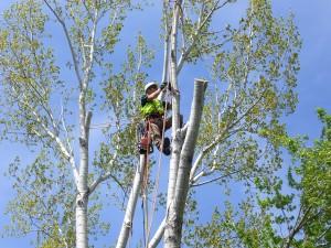 tree climbing milano